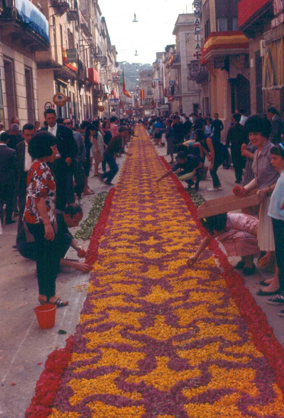 Elaboració de la catifa de flors del carrer major pel Corpus de l'any 1962. AMSFG. Fons Pere Rigau (Autor: Pere Rigau)
