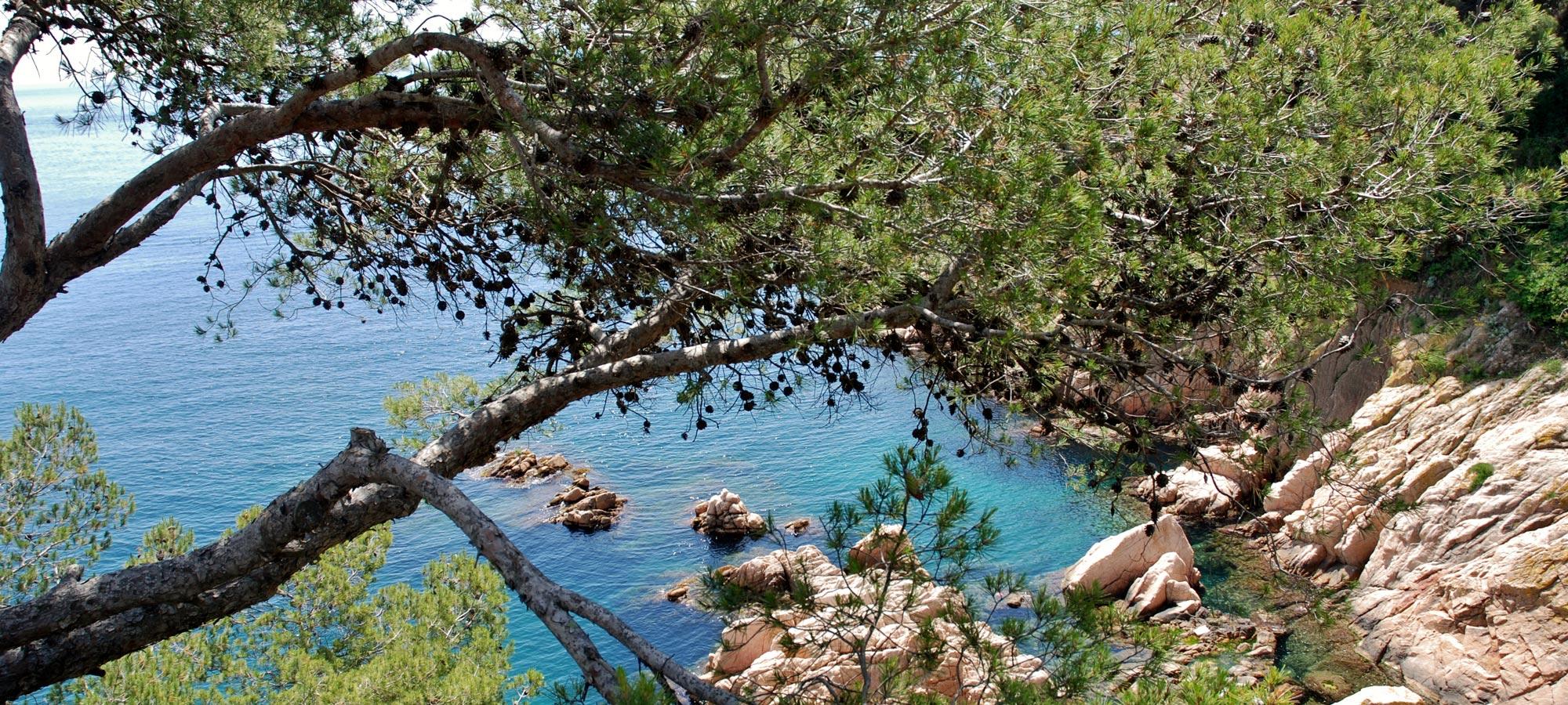 Sant Feliu de Guíxols - Mirador al Passeig marítim del President Josep Irla